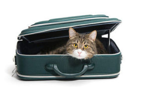 happy pets blog cat in suitcase