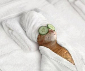 happy pets cat at spa