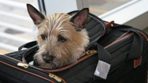 hapy pets blog dog traveling with dogs 10