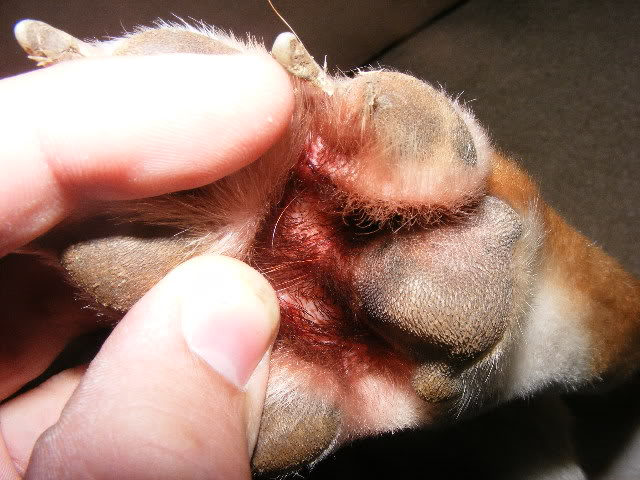 Stop Dogs Biting Their Paws