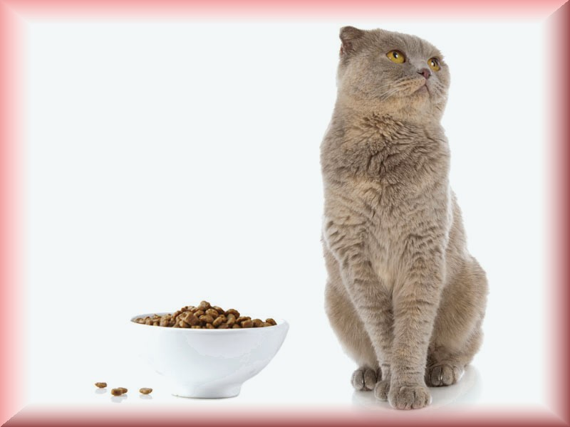 Can Vaccinations Cause A Problem For Cats