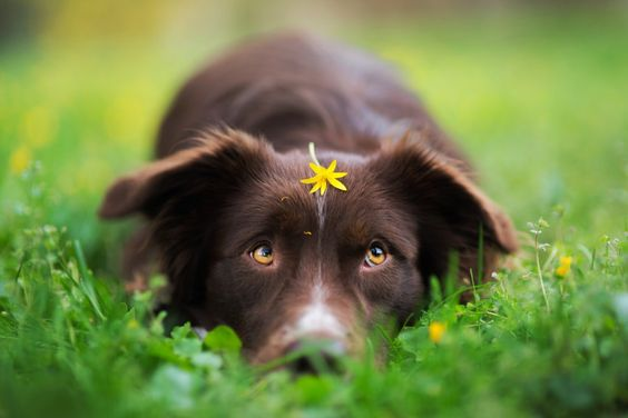 Can Dogs Be Allergic To Eating Grass